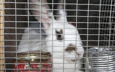 HAÏTI – L'élevage de lapins et la production de fruits et légumes pour s'autofinancer